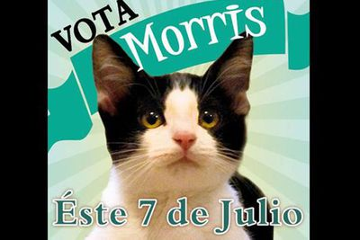 Morris the cat<br />