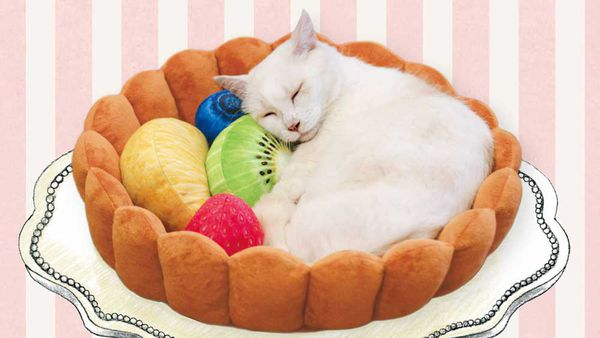The fruit tart cat bed