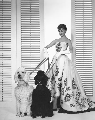 Actress Audrey Hepburn in 1954.