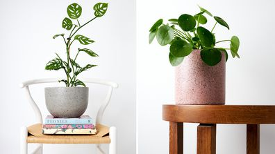 How to look after your indoor plants