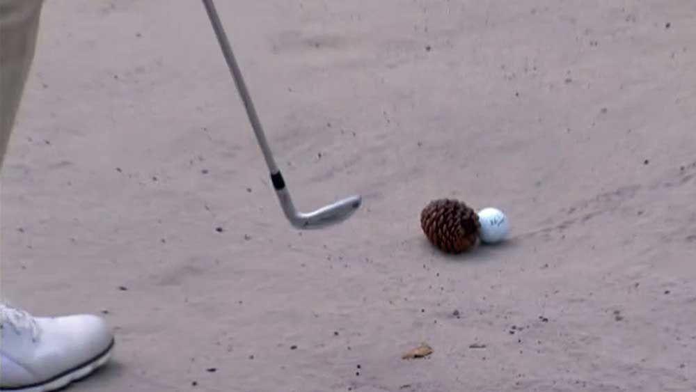 Golf: Pro finds bizarre hazard at Australian Open