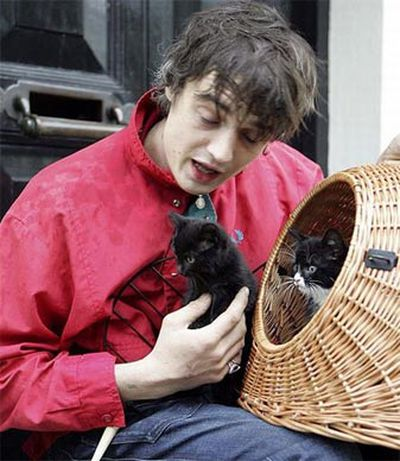 Stars and their cute kitties!<br/><br/>Junkie cats