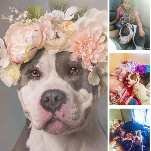 """""""Omg omg omg Bertha Bean has been adopted! Congrats Hempstead Town Animal Shelter!"""" (Sophie Gamand Photography)"""