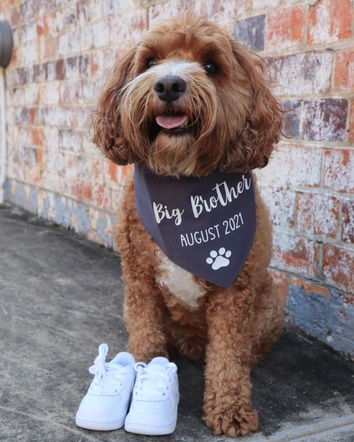She announced her pregnancy on social media with this photo of her dog.