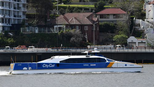 Council push to allow dogs on Brisbane CityCats and ferries