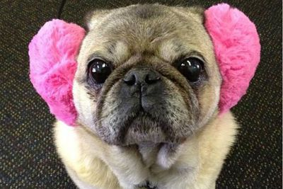 Cozmo, we love those ear muffs! Thanks Cheree!