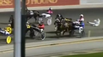 Veteran harness racing trainer critically injured in race