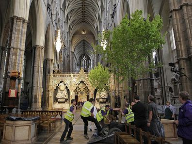 Workers put in place an English field maple tree in Westminster Abbey in London in preparation for the Royal wedding .   (Photo by Sang Tan/PA Images via Getty Images)
