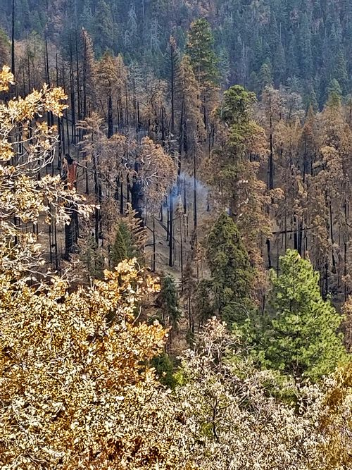The National Park Service said that the cause of the tree fire appears to be the 2020 Castle Fire.