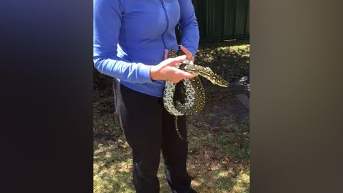 The snake was released in a safe place a short time later. (Supplied/Rebecca Pascall)