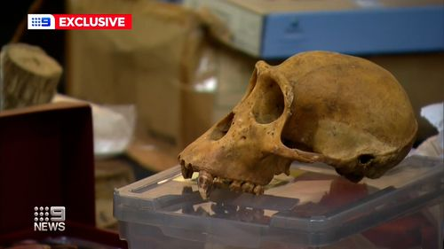 A skull was among the unusual items found by Australia Post.