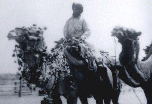 Afghan Cameleer Australia