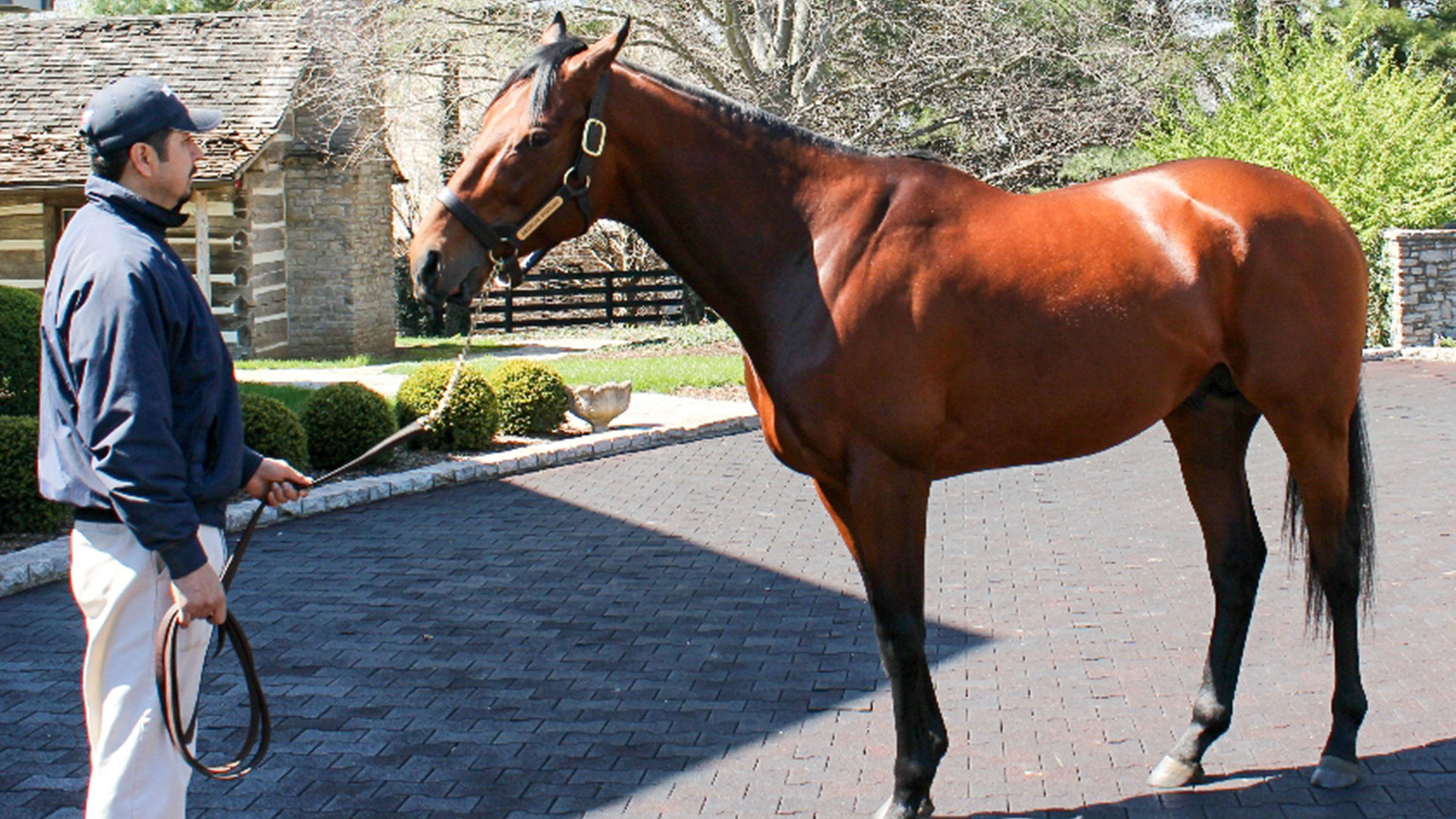 American Pharoah filly sells for astonishing price of nearly $12 million