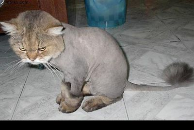 Image: <a href=http://www.shavedllamas.com>www.shavedllamas.com</a>