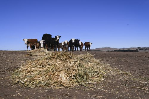 Livestock and wildlife are feeling the pressure put on feed levels and waterways as a result of the dry spell.