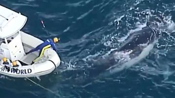 Whale freed from shark net off Gold Coast.