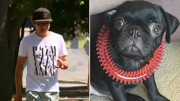 Owner of pet pug Egg 'stolen' at knife point charged after allegedly making up theft