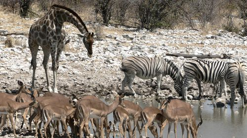 Report says wildlife across the globe is vanishing at a rate of 2% a year.