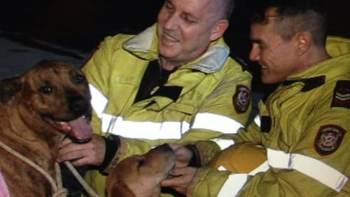 Firefighters with the man's dog and puppy. (9NEWS)