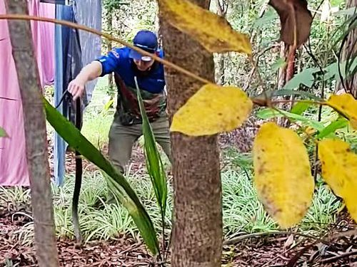 Despite eastern browns holding a notoriety for their fatal poison, Mr McKenzie said most Queenslander's have been calm with calling in the reptiles.