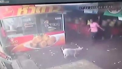 <p>Man does not kick dog, unless he wants karma to come back and bite him. </p><p> A surveillance video taken in a food market shows what happens when you try to lay the boot into man's best friend. </p><p> The stray pup wandered into the market, wagging its tail as it searches for a scrap to eat. </p><p> One man notices the cur walking around and tries to shoo the dog away by putting the boot into its head. </p><p> He walks up to the mutt and winds up a big kick. </p><p> But the clever canine hops back and watches as the kick swings up, up into the air while the man falls down, down on his face. </p><p> Karma bites him in the arse and he bites the concrete. </p><p> A friend helps him up and he walks woozily away as the latest recipient of the universe's instant karma delivery service.  </p><p> Check out the growing list.  </p><p> </p>