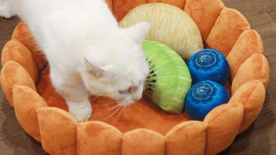 The gorgeous fruit tart cat bed