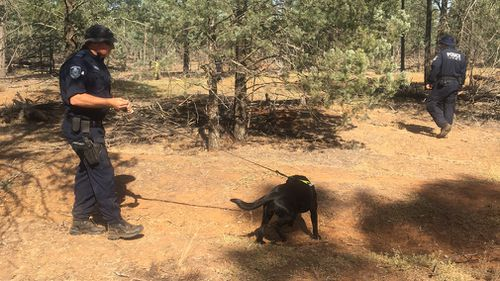 60 specialist officers are using cadaver dogs to comb over a 150m x 600m search area where they believe Allecha's body may be buried. Picture: 9NEWS/Grace Fitzgibbon.