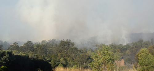 Homes threatened in Queensland bushfire
