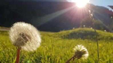 Grass, flowers, pollen, hayfever
