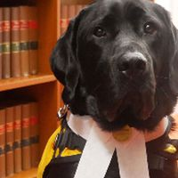 New staff member starts at South Australian court service- and he's a dog