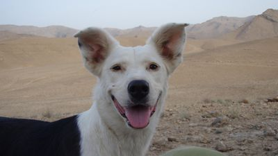 <p>Nova died in Afghanistan aged two, in an accident in October 2009. </p>