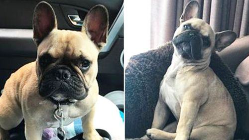'That's my dog, what are you doing': Jayda the French bulldog snatched metres from owner