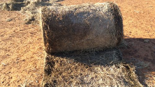 One of the bales of hay Mrs Truss claims her stock refuse to eat because of mould.