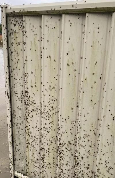 Spider flood warning