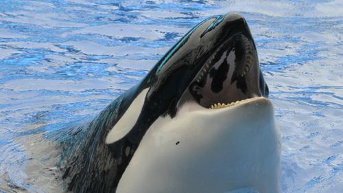 SeaWorld to phase out killer whale shows after backlash
