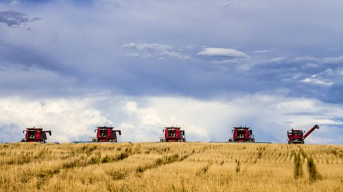 Row of large red combines harvesting wheat fields on the high plains of Colorado, USA. (Getty)