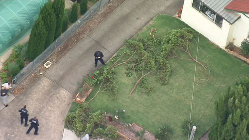 A man in his 50s has suffered critical head injuries after falling from a tree in the Sydney suburb of Carlingford.