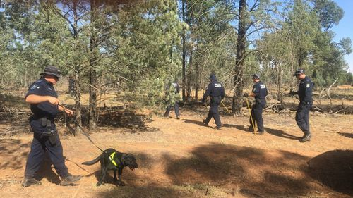 """Today, a large-scale police search is underway in the Lester State Forest, north of Wagga Wagga, to try and uncover Allecha's body and """"bring her home"""". Picture: 9NEWS/Grace Fitzgibbon."""