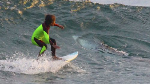 In a photo taken at Samurai Beach last year, 10-year-old surfer Eden Hasson comes very close to a Great White Shark.