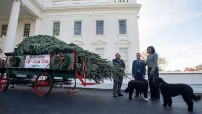 Jay Bustard and his brother Glen Bustard from Bustard's Christmas Trees, Lansdale, presented the tree to the First Lady. (AAP)