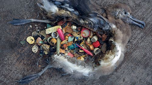 According to UNESCO, plastic debris kills more than 1 million seabirds every year, as well as more than 100,000 marine mammals.