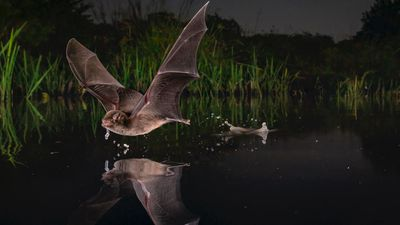 'A Sip' - Gorongosa National Park, Mozambique: Winged Life category 2020 winner.