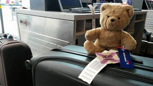 The bear traveled more than 7400km to get home.   (Scott Cranmer/ Facebook)