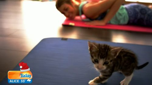 Yoga lovers can also spend time with adorable kittens.