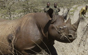 South Africa doubles number of black rhinos to be killed by trophy hunters