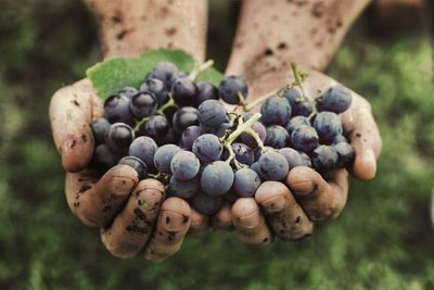 <strong>Grapes</strong>