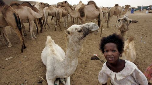 A Mauritanian girl beside a herd of camels. (AAP)