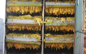 Members of black market tobacco syndicate have failed in their early release bid