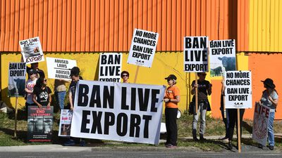 Live export boss to be sentenced in Perth