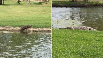 Crocodile family take up residence at popular golf course